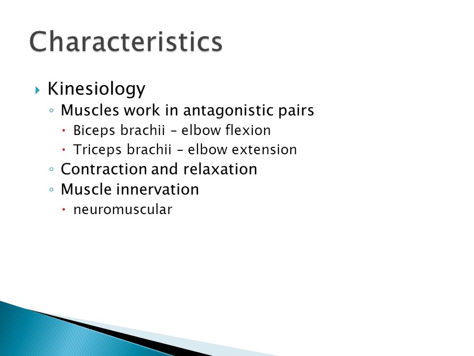 Characteristics Kinesiology Muscles work in antagonistic pairs