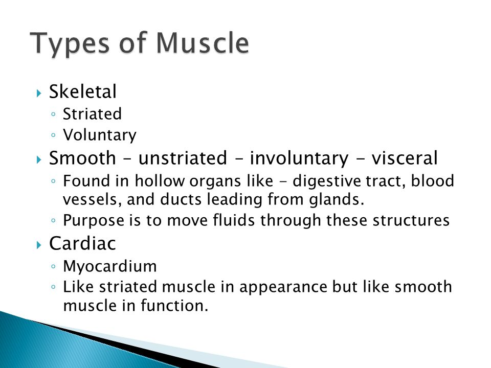 Types of Muscle Skeletal Smooth – unstriated – involuntary - visceral