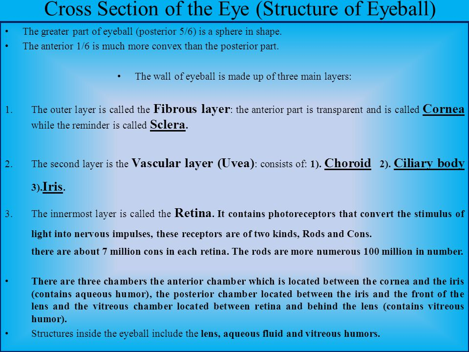 Cross Section of the Eye (Structure of Eyeball)