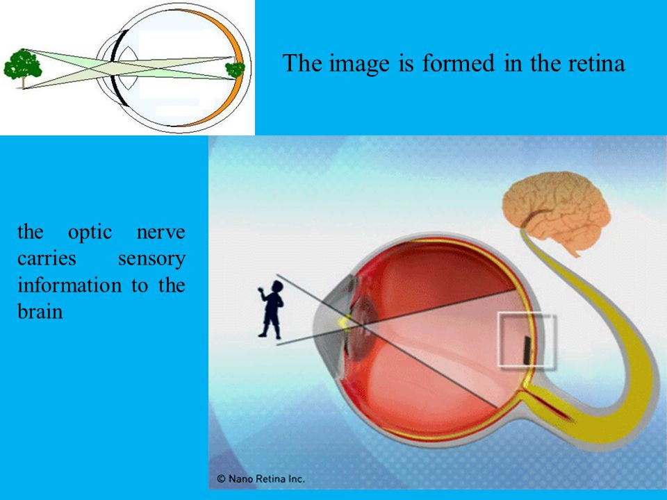 The image is formed in the retina