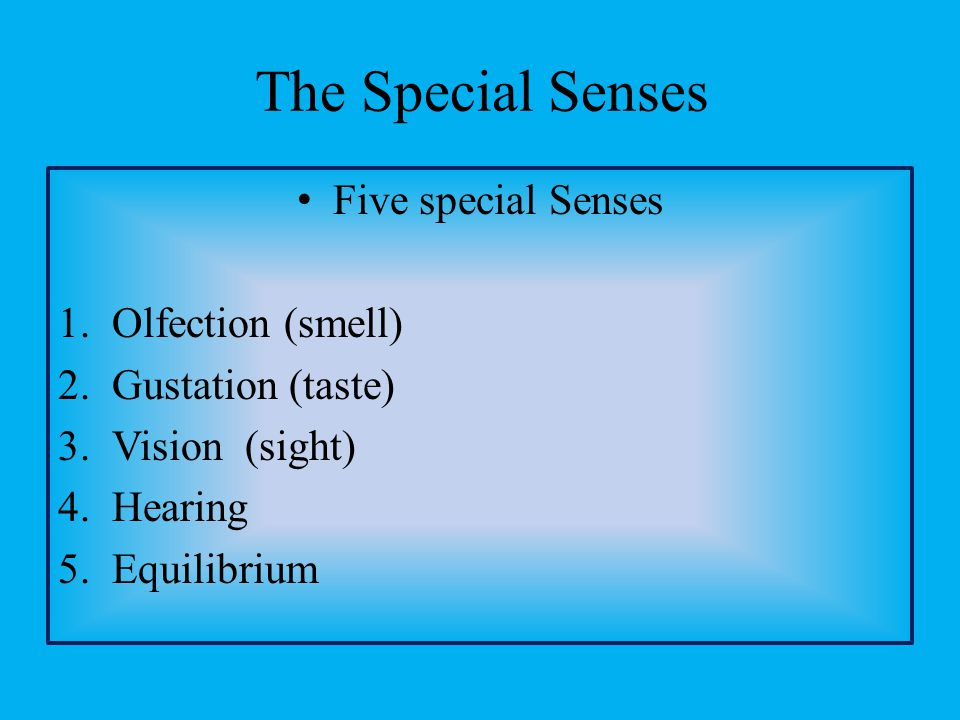 The Special Senses Five special Senses Olfection (smell)