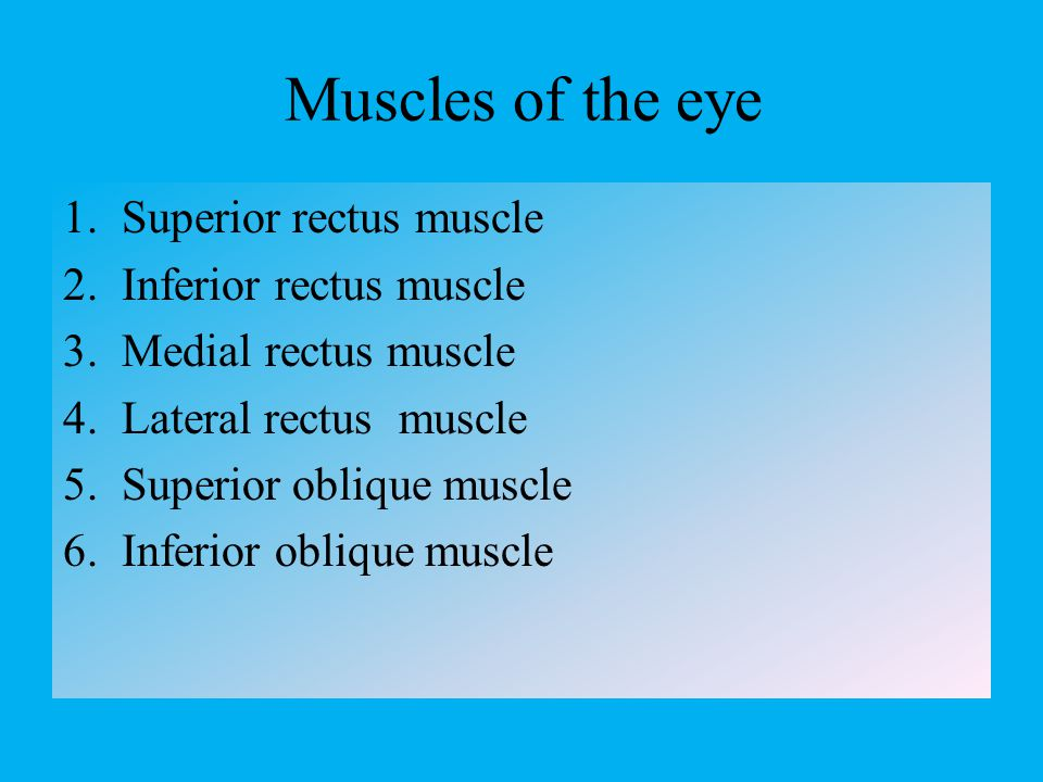 Muscles of the eye Superior rectus muscle Inferior rectus muscle