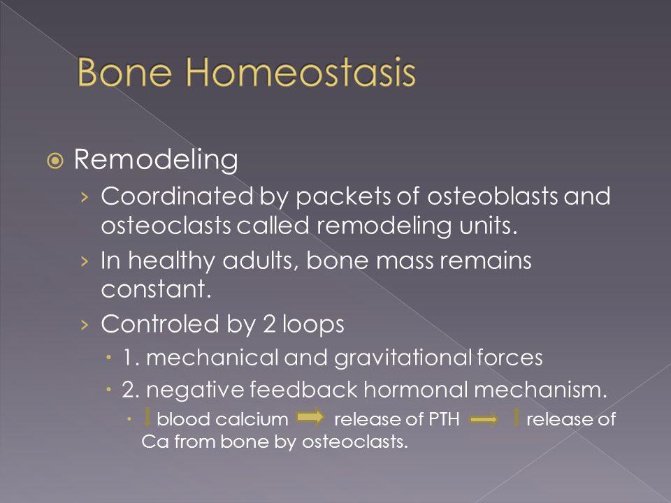 Bone Homeostasis Remodeling