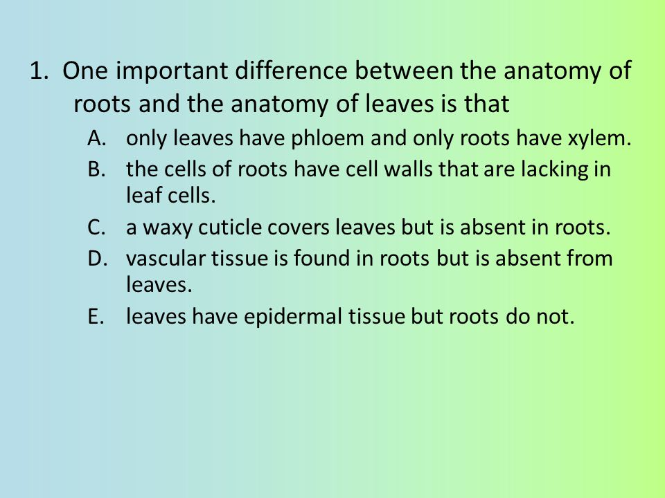 1. One important difference between the anatomy of roots and the anatomy of leaves is that
