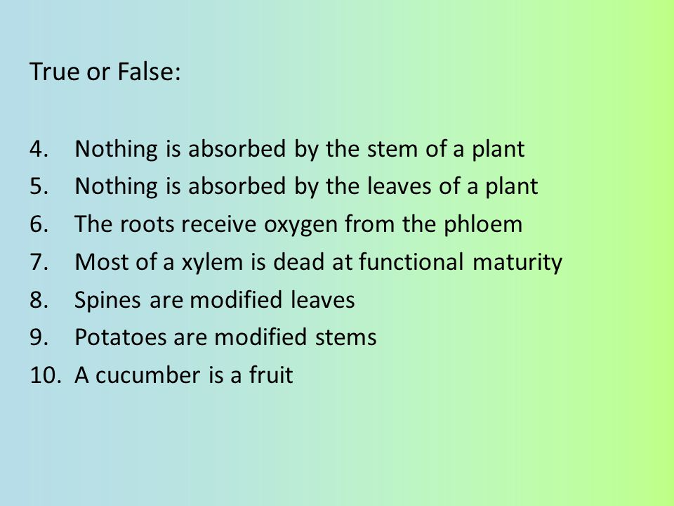 True or False: Nothing is absorbed by the stem of a plant