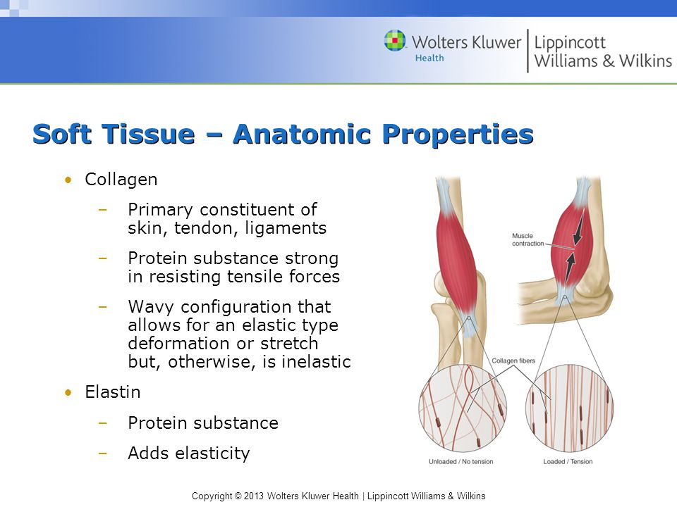 Soft Tissue – Anatomic Properties