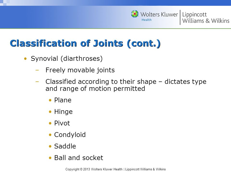 Classification of Joints (cont.)