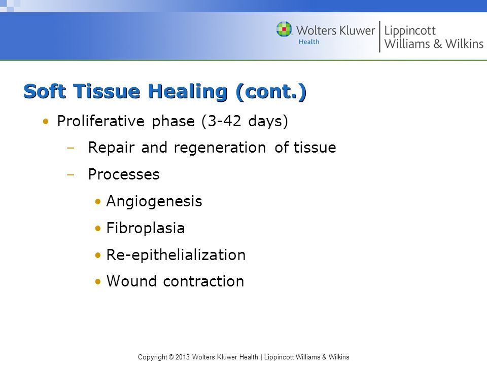 Soft Tissue Healing (cont.)