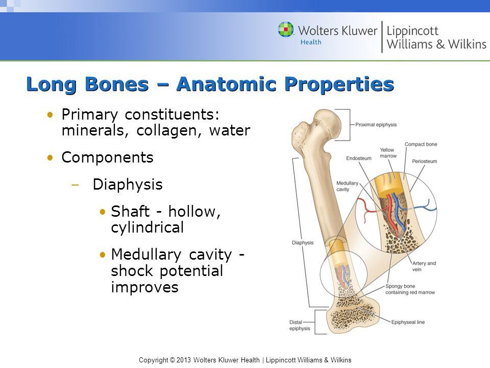 Long Bones – Anatomic Properties