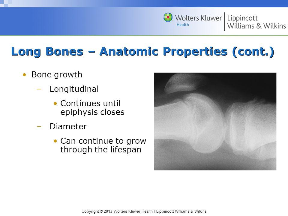 Long Bones – Anatomic Properties (cont.)