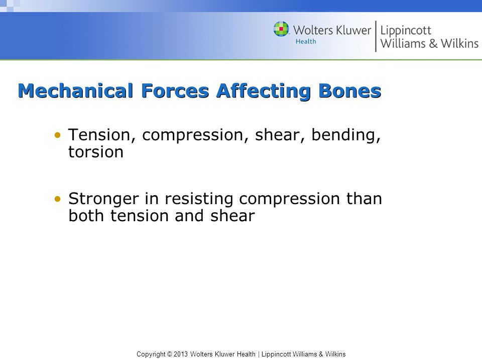 Mechanical Forces Affecting Bones
