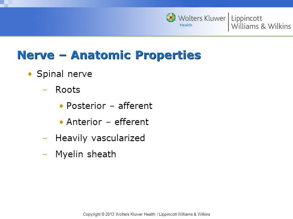 Nerve – Anatomic Properties