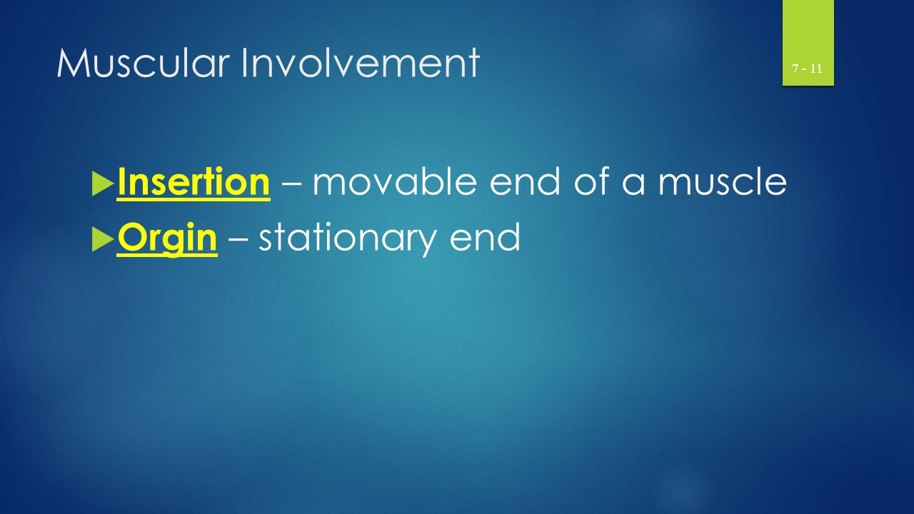 Muscular Involvement Insertion – movable end of a muscle