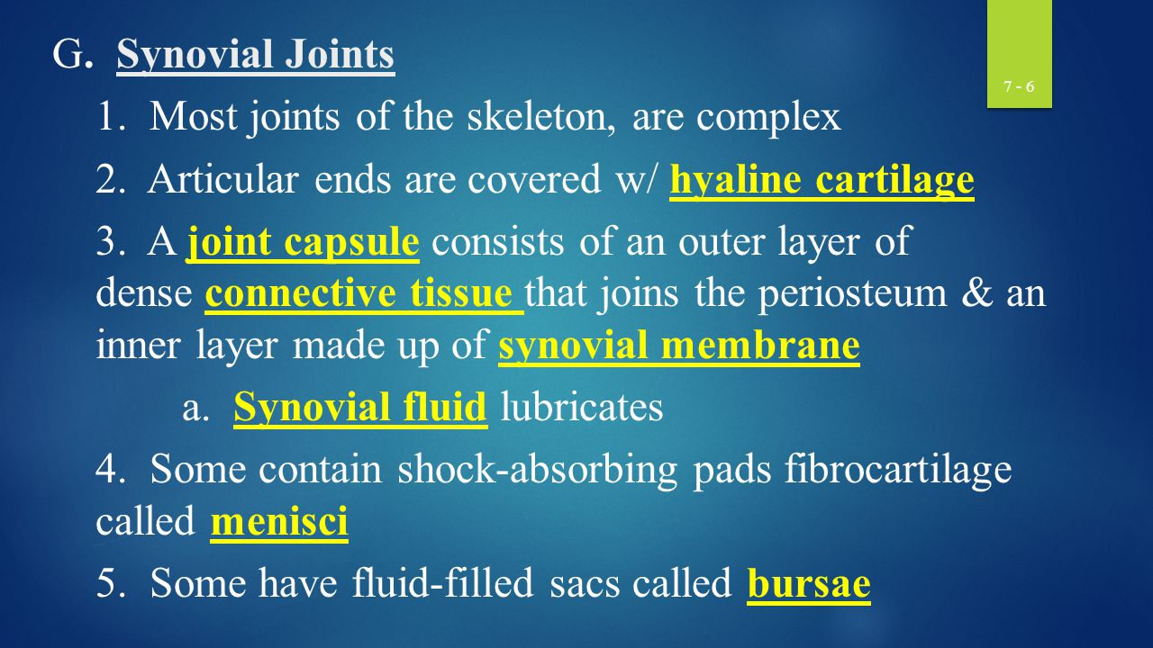 G. Synovial Joints 1. Most joints of the skeleton, are complex. 2. Articular ends are covered w/ hyaline cartilage.