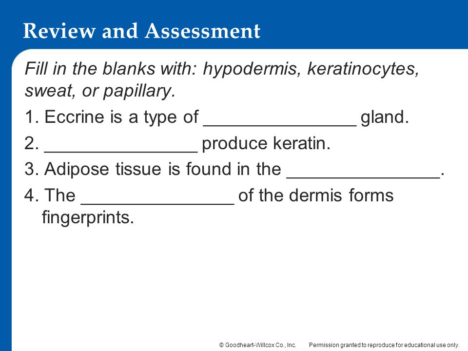 Review and Assessment Fill in the blanks with: hypodermis, keratinocytes, sweat, or papillary. 1. Eccrine is a type of _______________ gland.