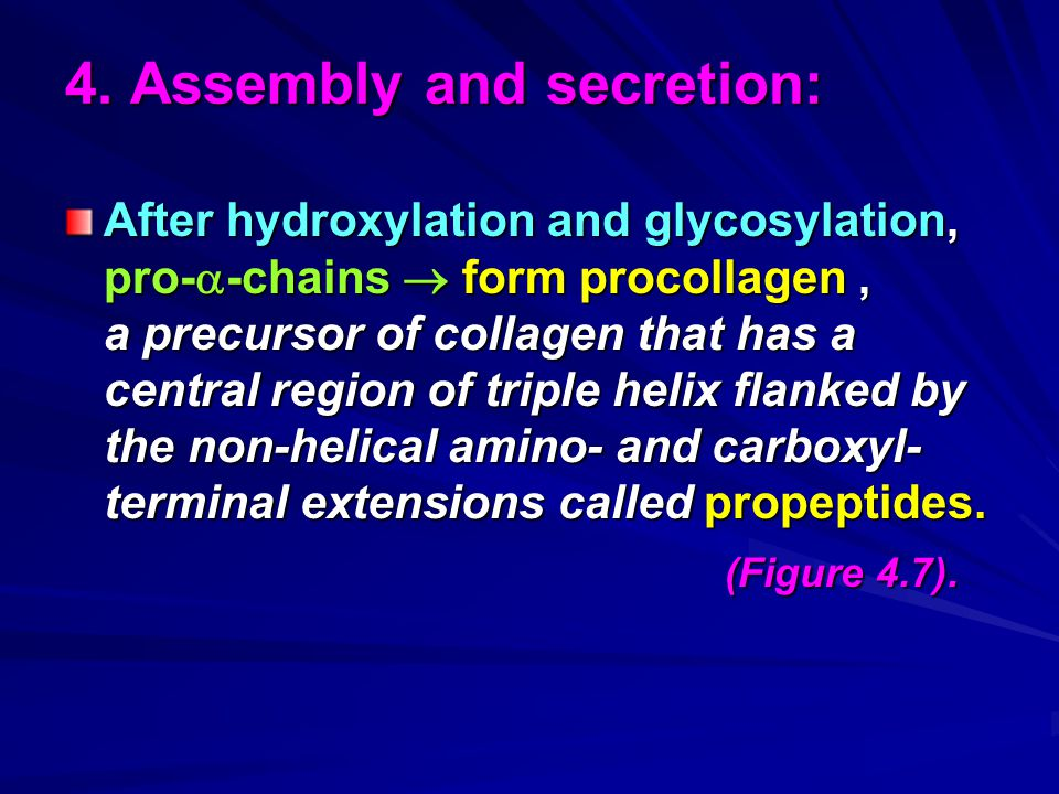 4. Assembly and secretion: