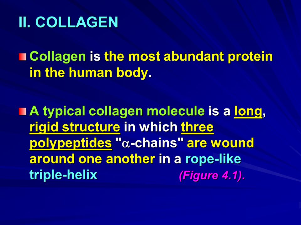 II. COLLAGEN Collagen is the most abundant protein in the human body.