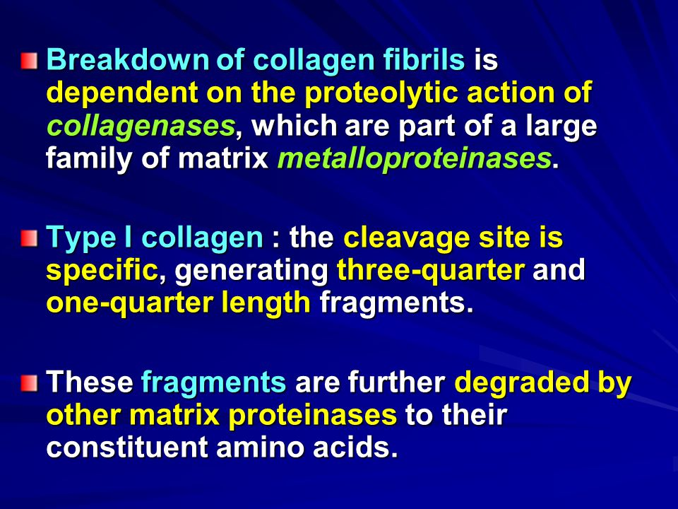 Breakdown of collagen fibrils is dependent on the proteolytic action of collagenases, which are part of a large family of matrix metalloproteinases.