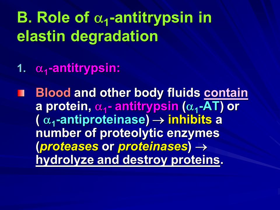 B. Role of 1-antitrypsin in elastin degradation