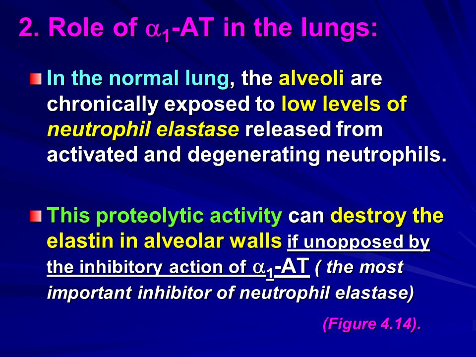2. Role of 1-AT in the lungs:
