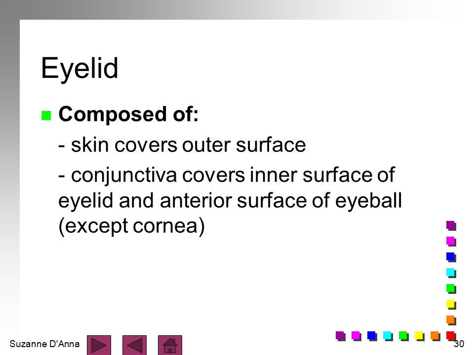 Eyelid Composed of: - skin covers outer surface