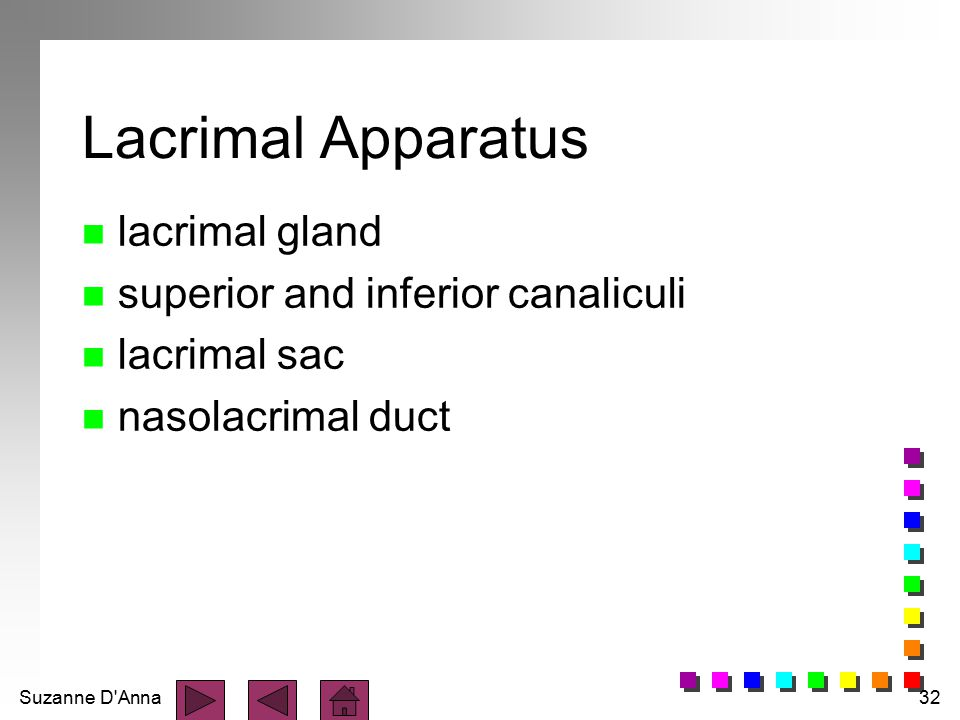 Lacrimal Apparatus lacrimal gland superior and inferior canaliculi
