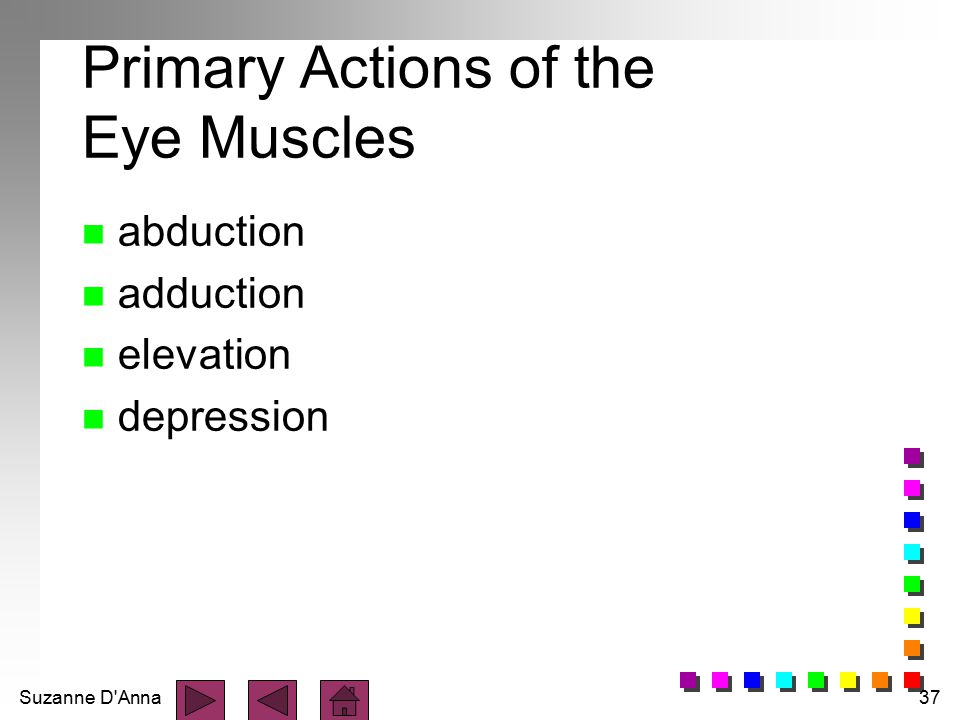 Primary Actions of the Eye Muscles