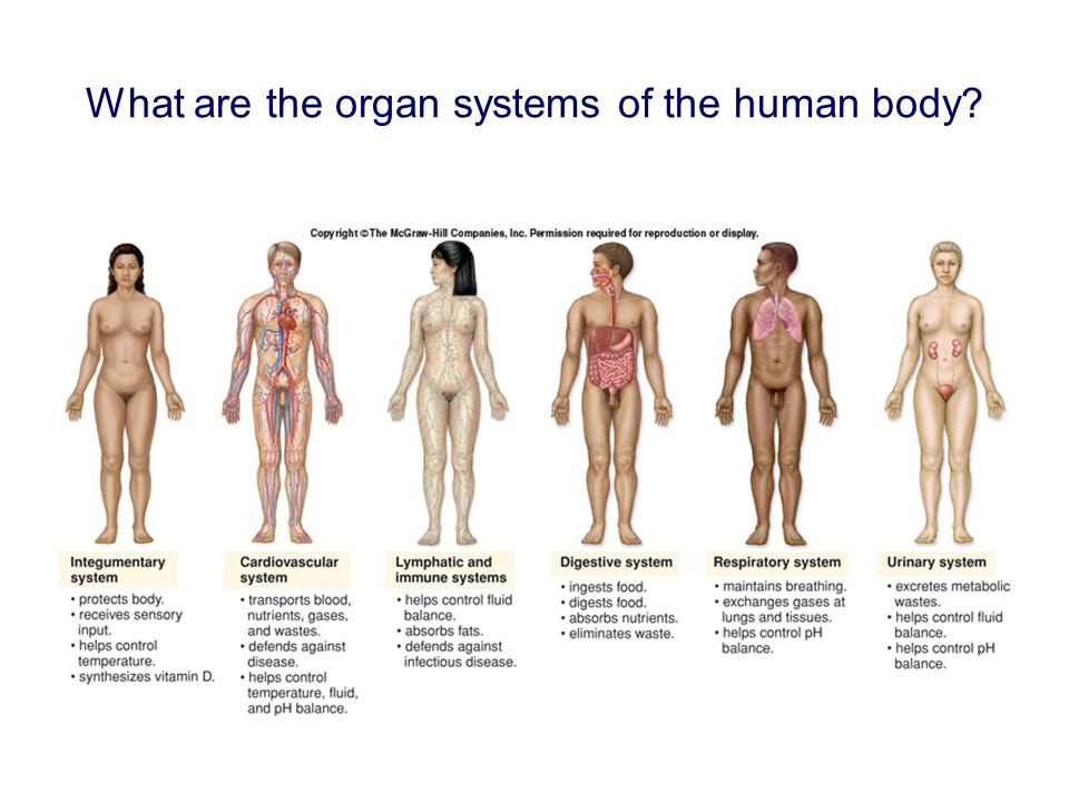What are the organ systems of the human body