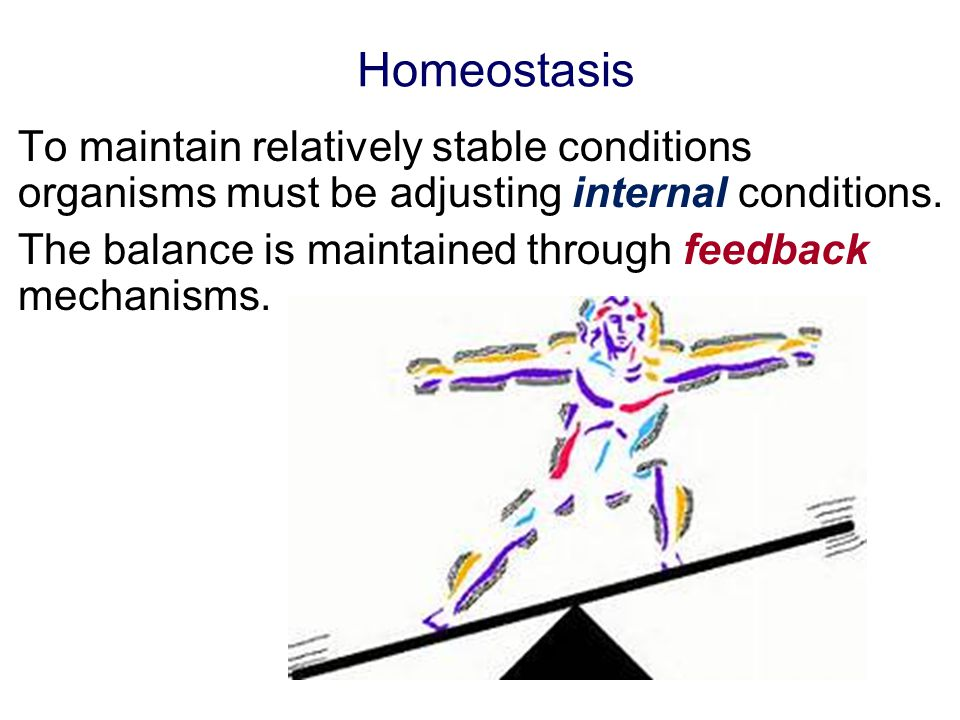 Homeostasis To maintain relatively stable conditions organisms must be adjusting internal conditions.