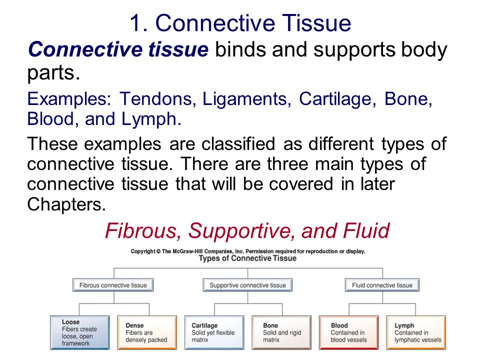 Fibrous, Supportive, and Fluid