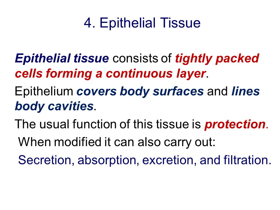 4. Epithelial Tissue Epithelial tissue consists of tightly packed cells forming a continuous layer.