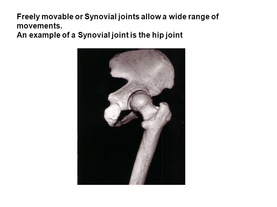 Freely movable or Synovial joints allow a wide range of movements