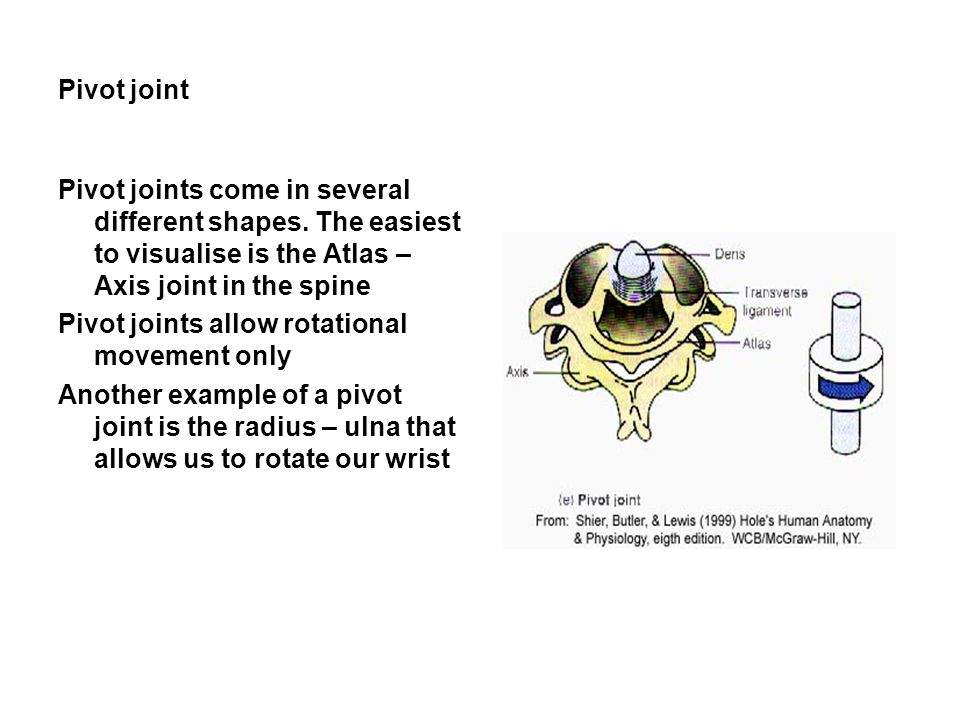 Pivot joint Pivot joints come in several different shapes. The easiest to visualise is the Atlas – Axis joint in the spine.