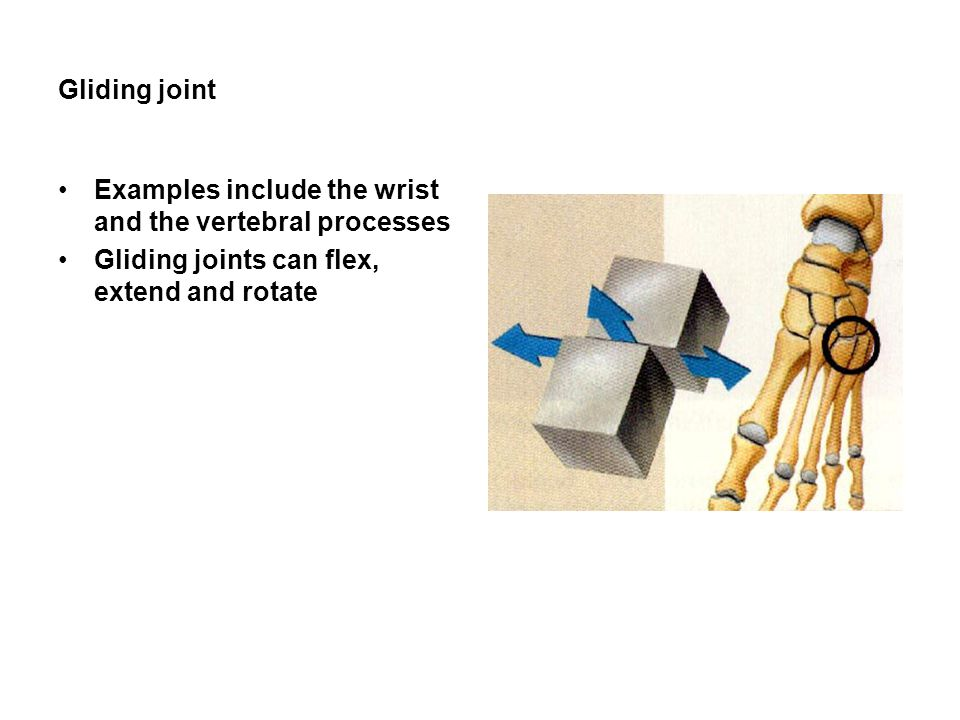 Gliding joint Examples include the wrist and the vertebral processes.