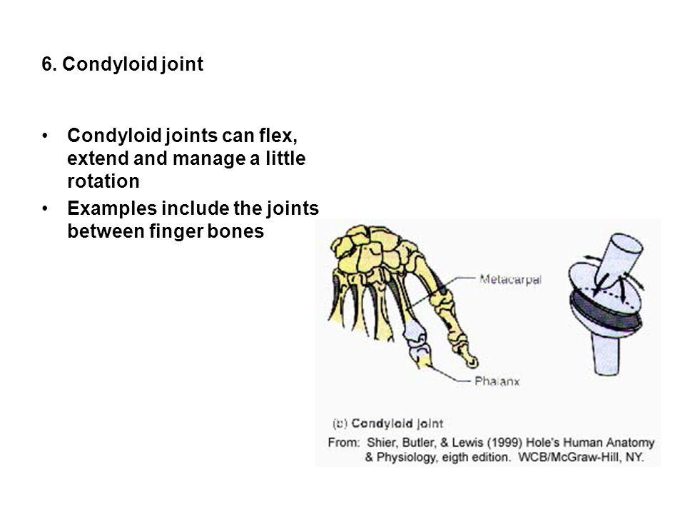 6. Condyloid joint Condyloid joints can flex, extend and manage a little rotation.