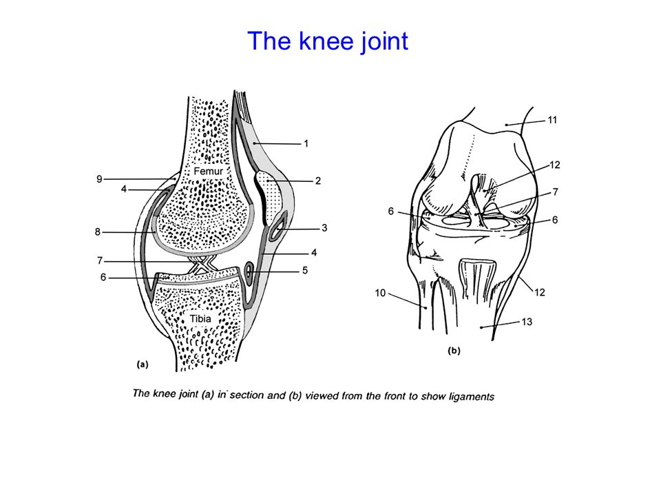 bones and joints hbs 3b