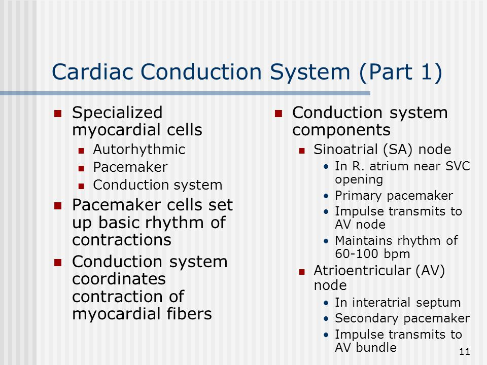 Cardiac Conduction System (Part 1)