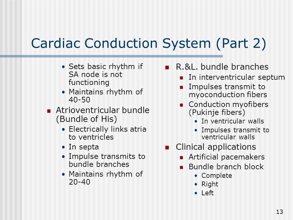 Cardiac Conduction System (Part 2)