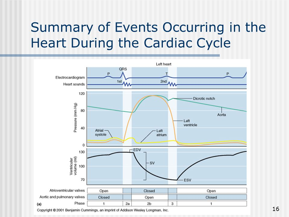 Summary of Events Occurring in the Heart During the Cardiac Cycle