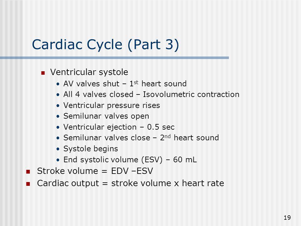 Cardiac Cycle (Part 3) Ventricular systole Stroke volume = EDV –ESV