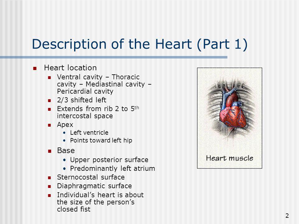 Description of the Heart (Part 1)