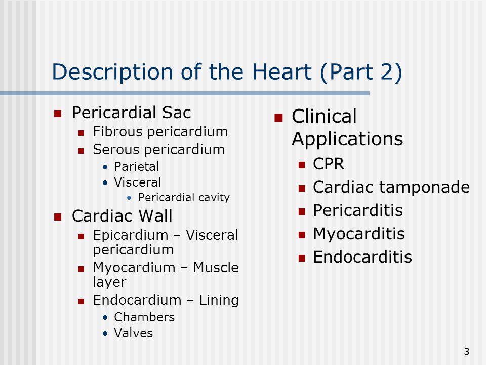 Description of the Heart (Part 2)