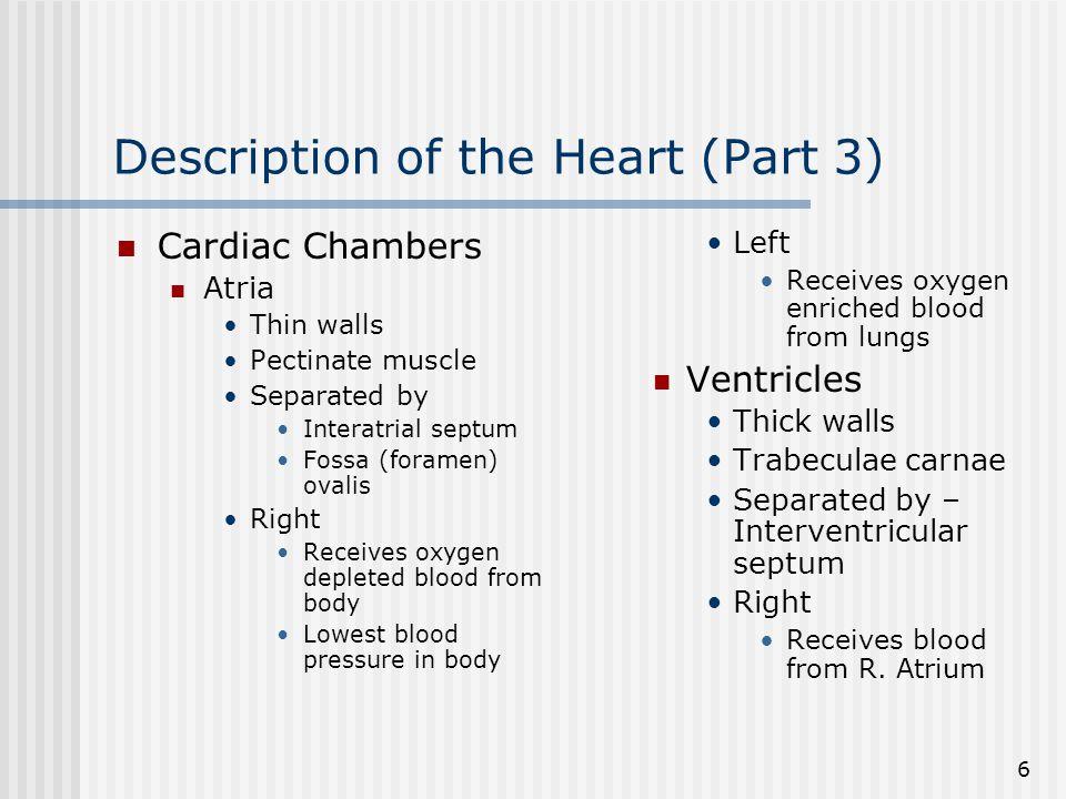 Description of the Heart (Part 3)