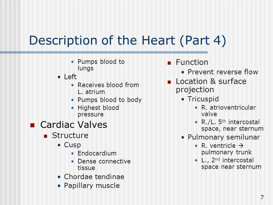 Description of the Heart (Part 4)
