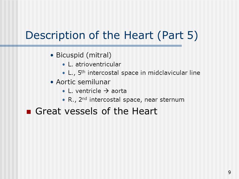Description of the Heart (Part 5)