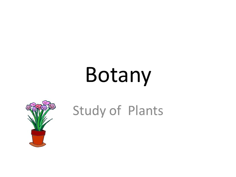 Botany Study of Plants