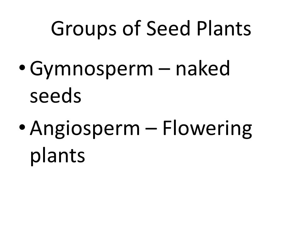Groups of Seed Plants Gymnosperm – naked seeds Angiosperm – Flowering plants