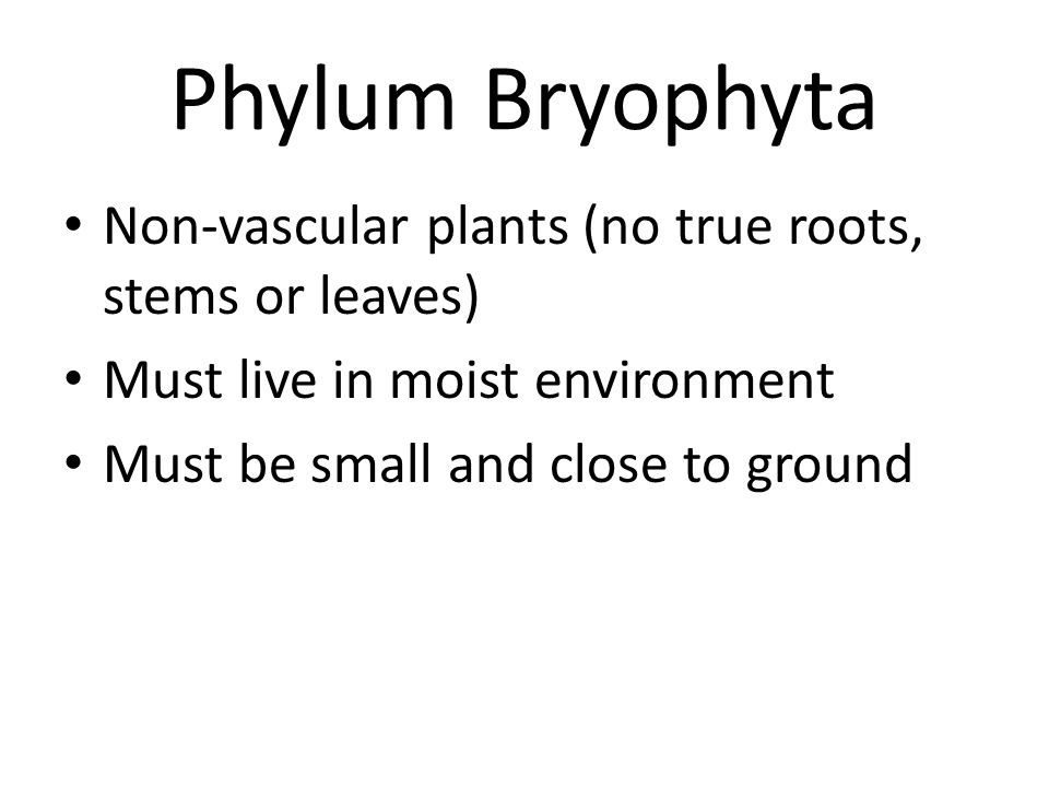 Phylum Bryophyta Non-vascular plants (no true roots, stems or leaves)