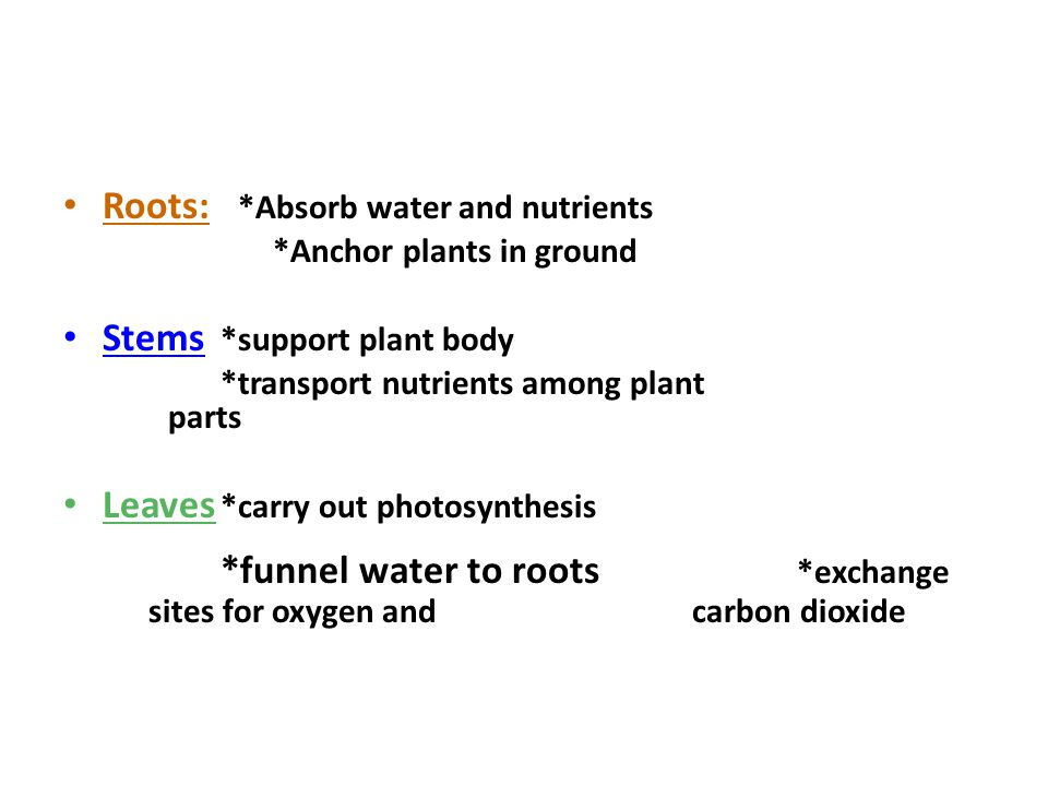 Roots: *Absorb water and nutrients
