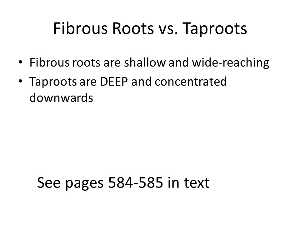 Fibrous Roots vs. Taproots